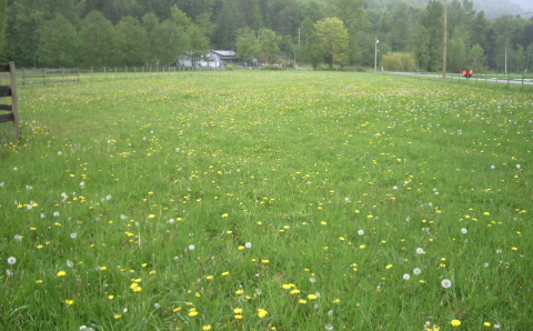 Well managed pastures
