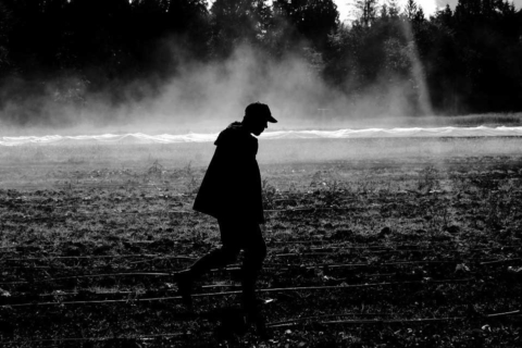 Farmer in field at certified organic farm, black and white