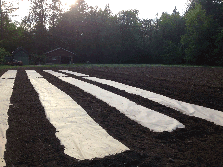 Kraft paper mulch