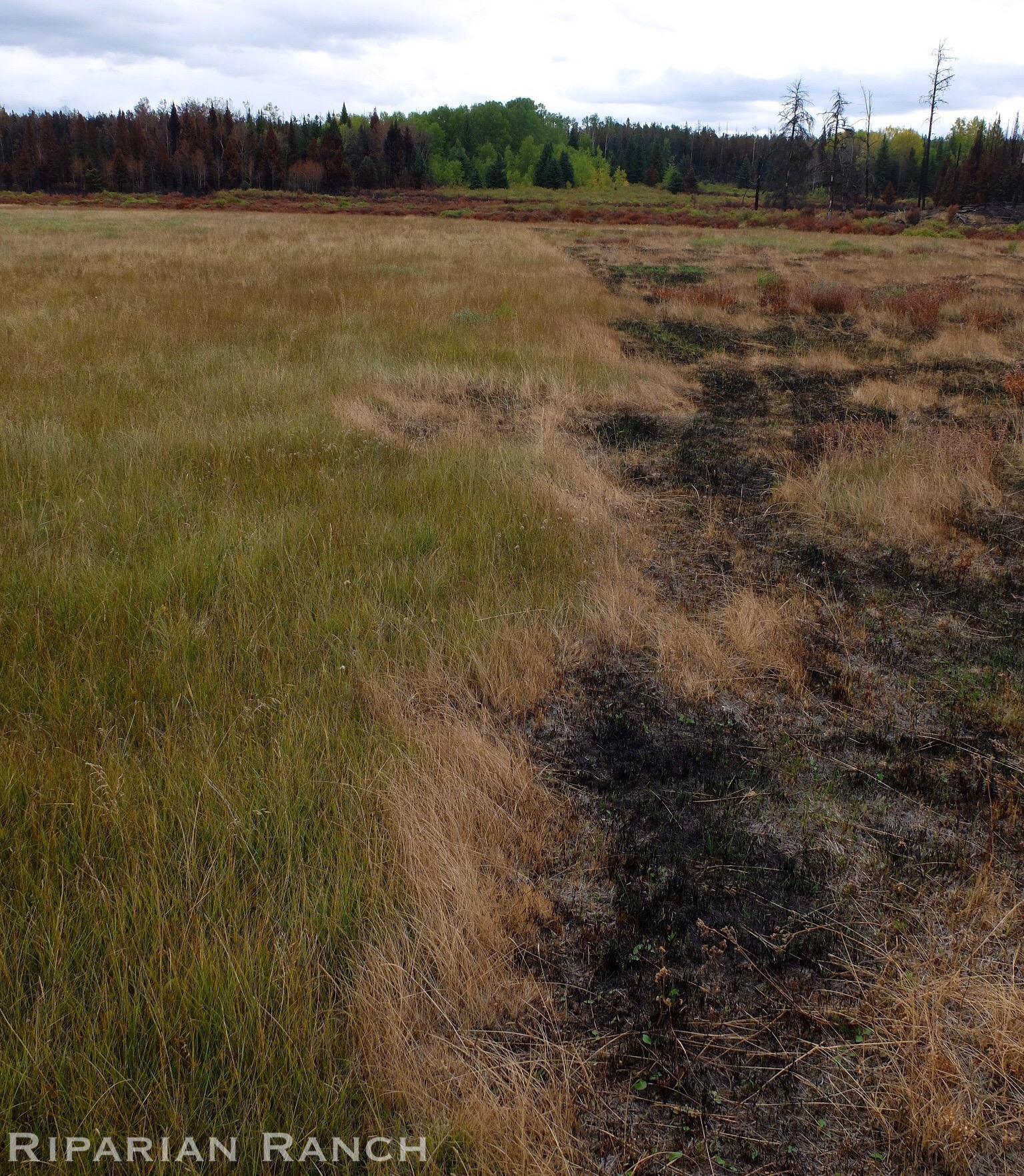 Intensively grazed pasture stopped the spread of fire